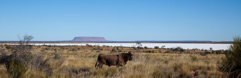 Plan your visit to include a SEIT Outback Australia tour visiting Mt Conner