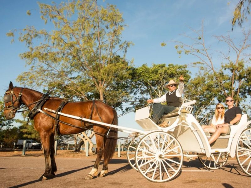 Romantic Horse and Carriage ride, East Point, Darwin