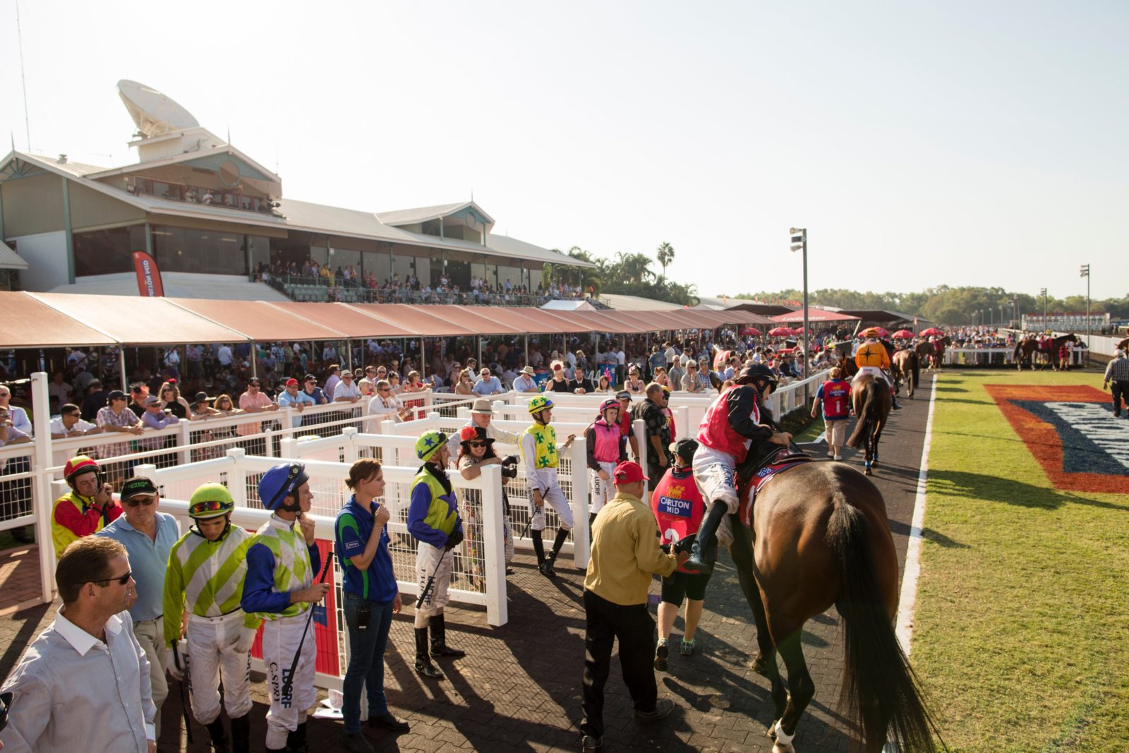 A large crowd of people cheer as horses and jockeys get ready to run the race