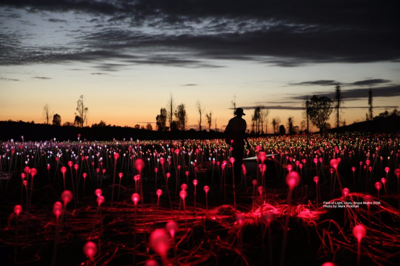 Field of Light Uluru- Red Stems