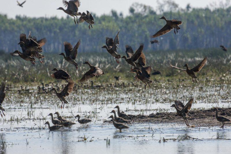 Gayngaru Wetlands Interpretive Walk, Arnhem Land Area, Northern Territory, Australia