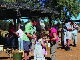 Gem Tree Tours Alice Springs
