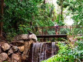 Waterfall and Lookout in the Rainforest