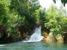 Tufa dams on the Flora River