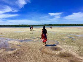 Shells - Gululu Day Tour Lirrwi Tourism