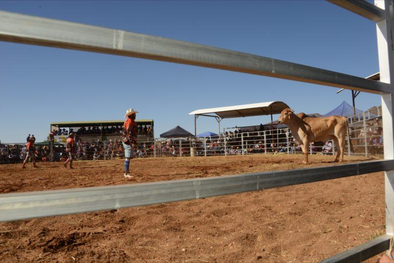 Rodeo Clown & Bull Stand Off