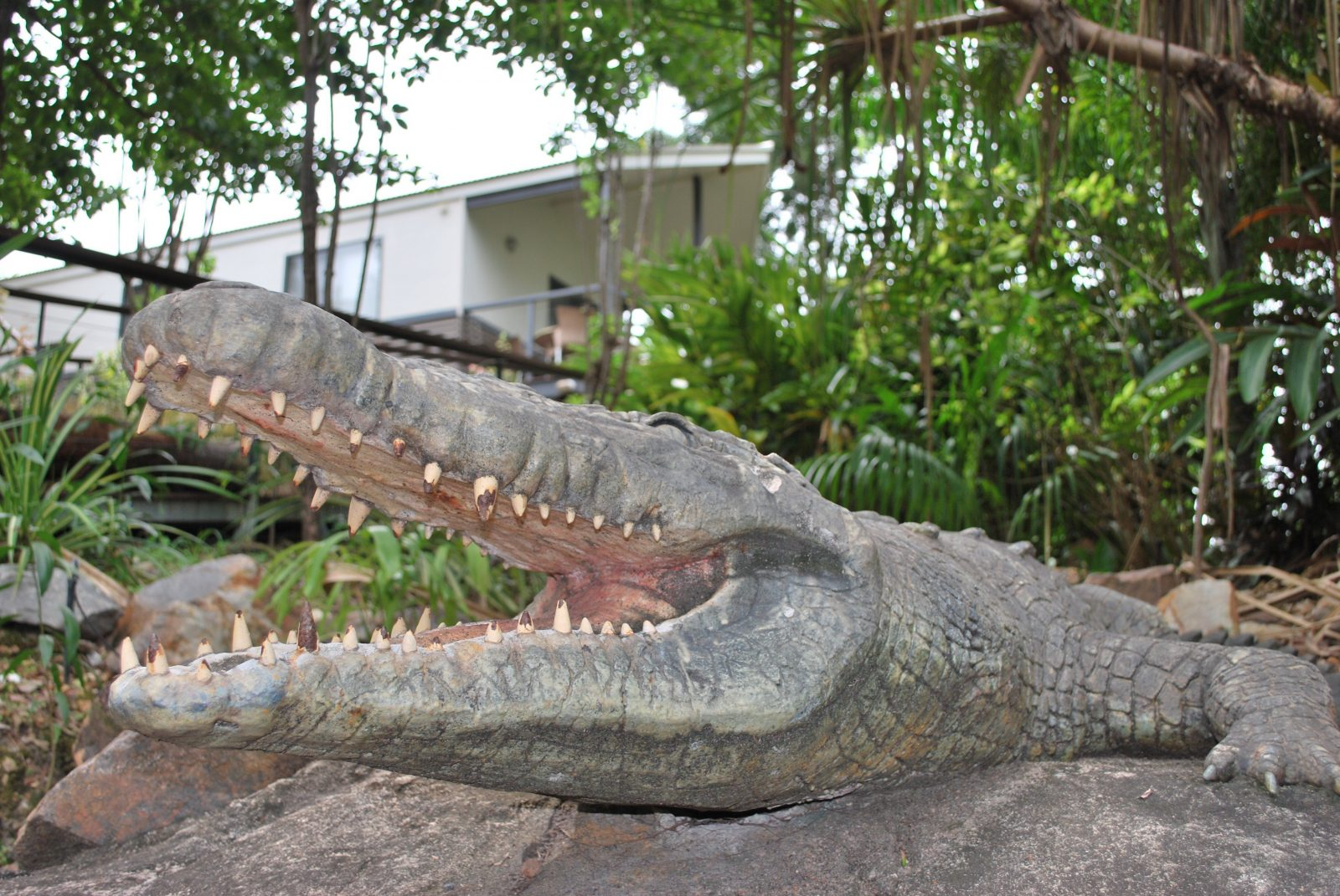 Brutus| our | Friendly | Crocodile