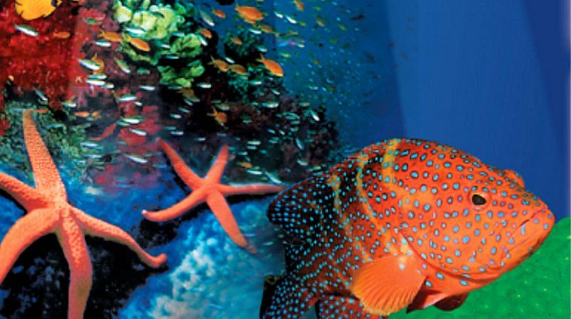 Indo Pacific Marine, Darwin Area, Northern Territory, Australia