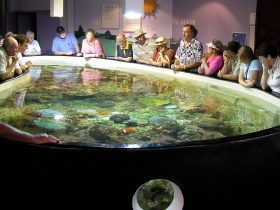 Tourists standing around a large fish tank looking at the sea life