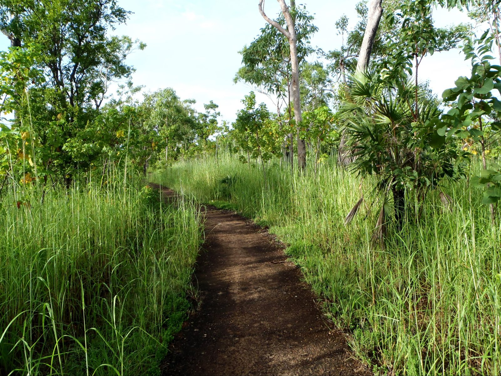 Jabiru to Bowali walking track