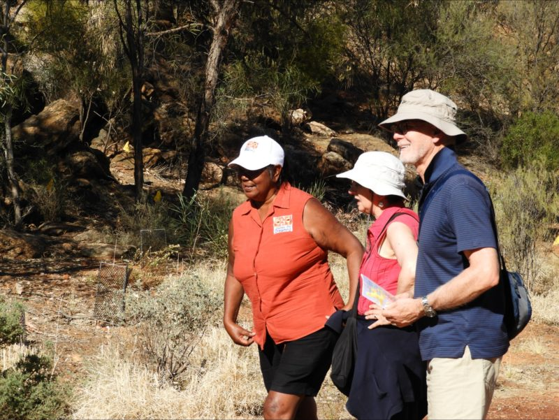 Bush medicine Northern Terriotry Cultural walking tours Alice Springs dreaming native plants
