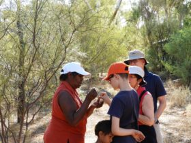 Bush Medicine Alice Springs Walking Tour Cultural Aboriginal Botanical Indigenous