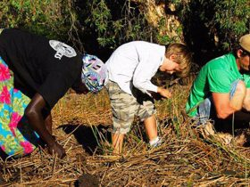 Kakadu Animal Tracks