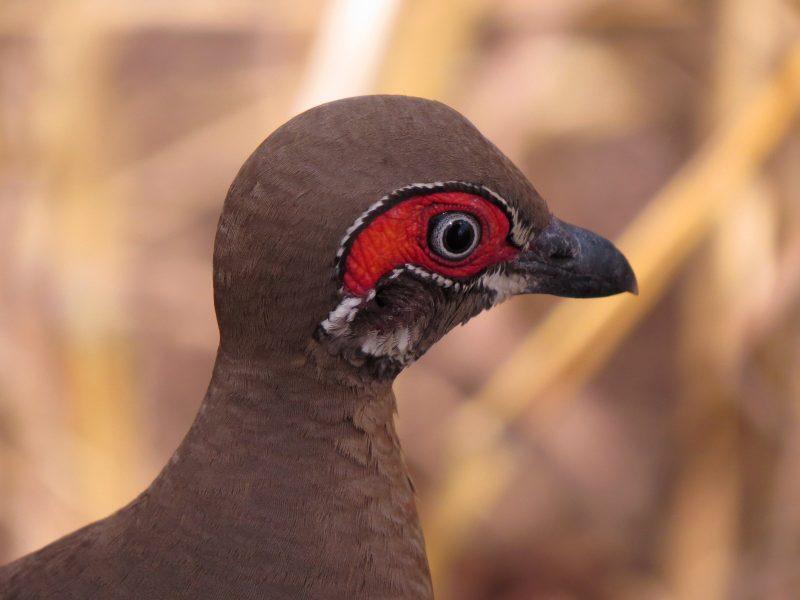 NT Birding Trails NT Bird Specialists