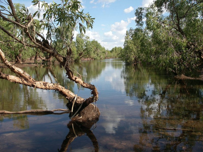 Waterhole lined with paperbark trees on the Victoria River at Kalkarindji.