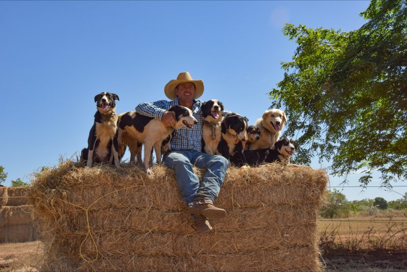 Tom Curtain with the Riverboyne Working Dogs of Katherine Outback Experience