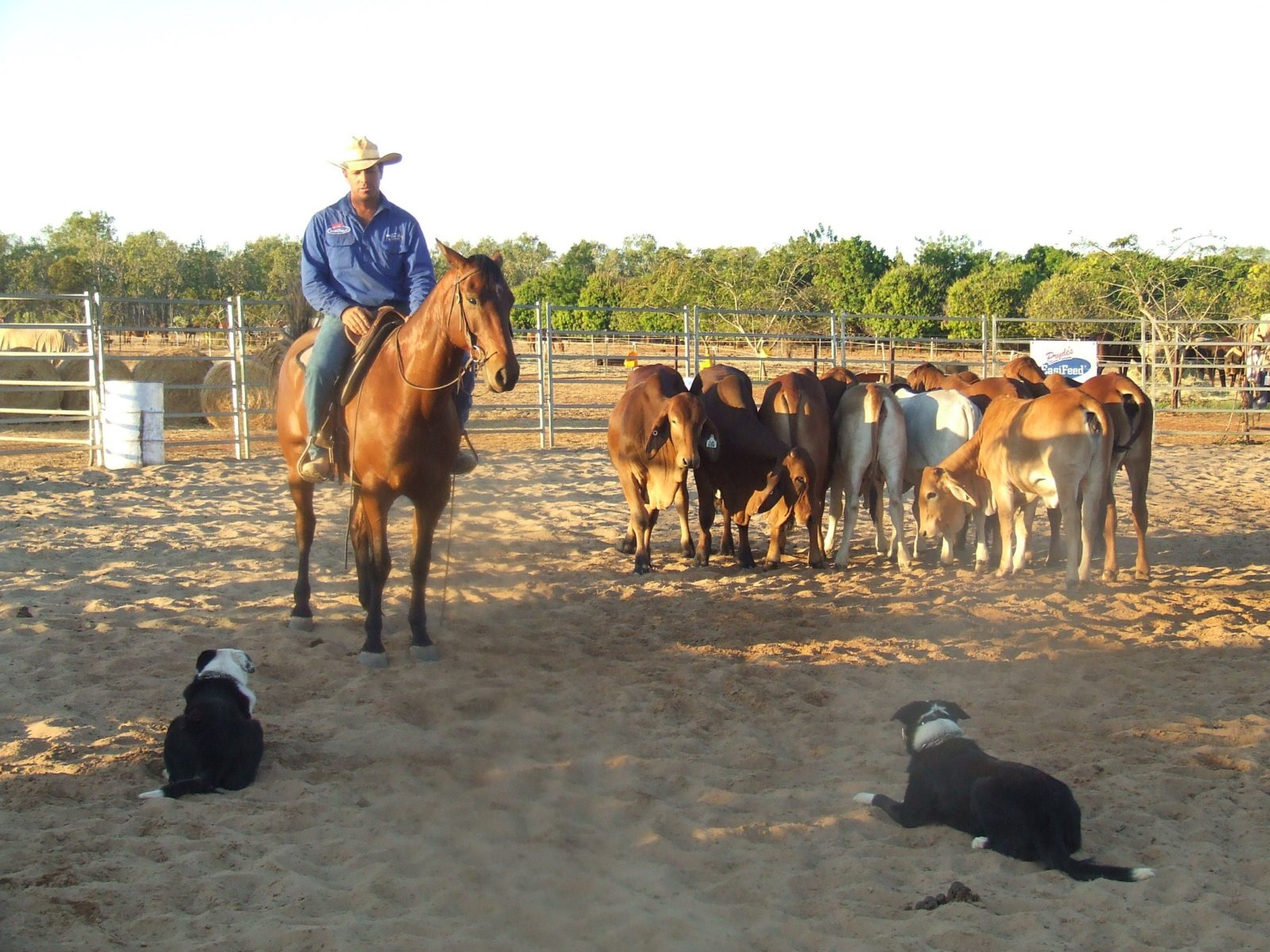 katherine outback tours