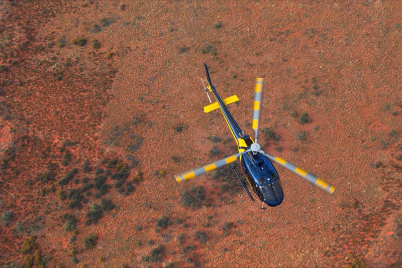 Kings Canyon Squirrel AS 350 Northern Territory