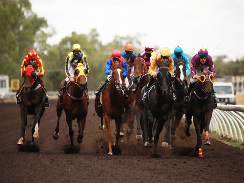 Horses in racing action