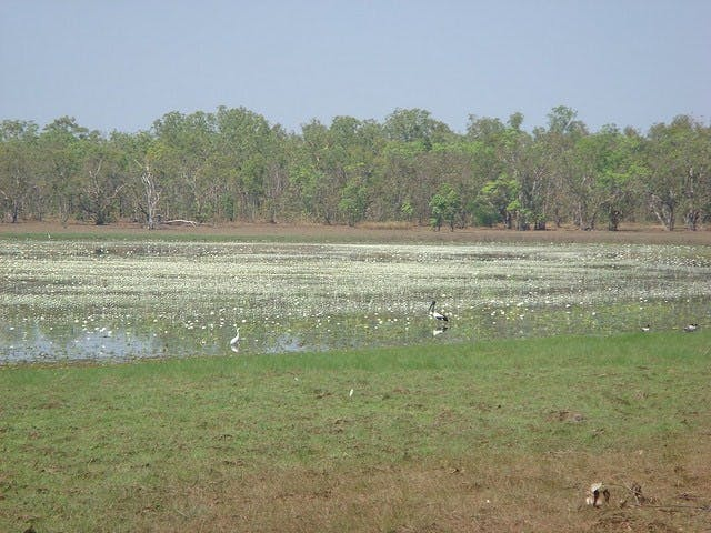 Leaning Tree Lagoon Nature Park, Darwin Area, Northern Territory, Australia