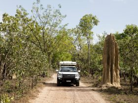 Driving past a cathedral termite mound in Litchfield National Park