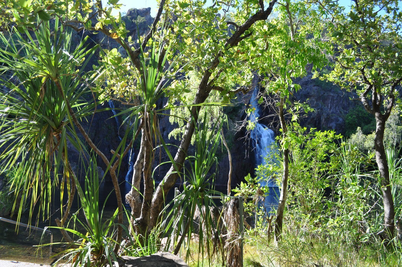 Manngarre Rainforest Walk, Kakadu Area, Northern Territory, Australia