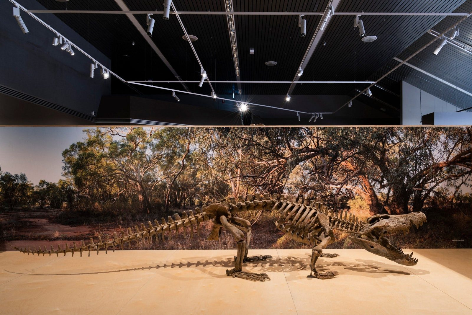New species of crocodile uncovered Megafauna Central Alice Springs