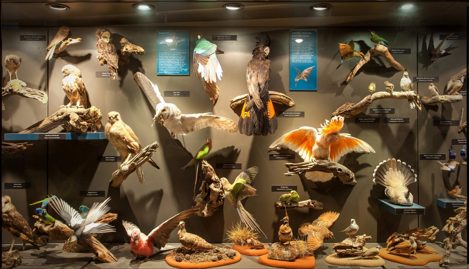Museum of Central Australia display