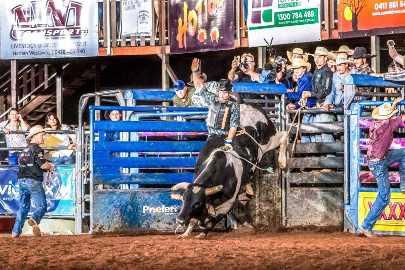 Feature Bull Guns n Roses coming out of the chute