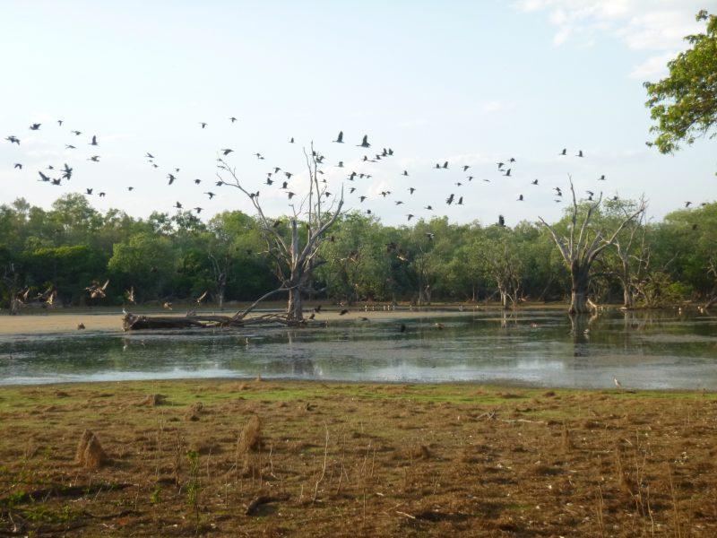 Oolloo Billabong Breakfast with birds