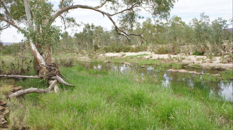 Section of Ormiston Creek, near to the old homestead ruins