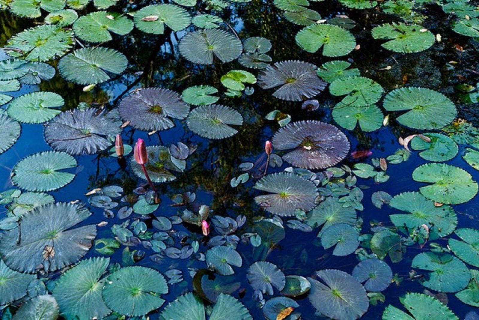 Pine Creek Water Gardens