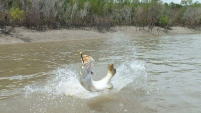 River and Reef Fishing Charters - Darwin area, Northern Territory
