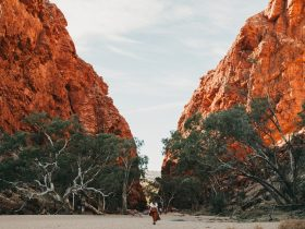 A woman walking in the dry river bed towards the enormous red escarpments of Simpsons Gap