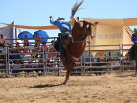 2nd round of open saddle bronc ride
