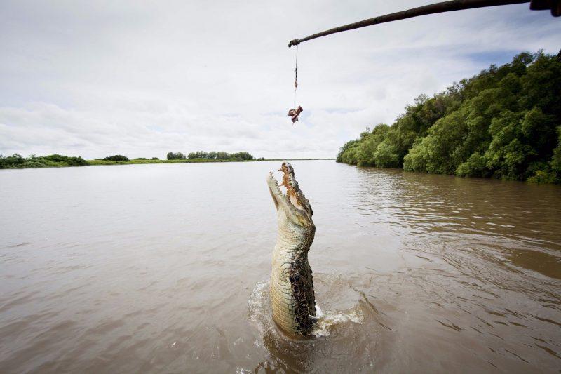 Male Croc