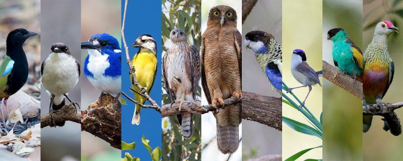Local Darwin Birding Targets