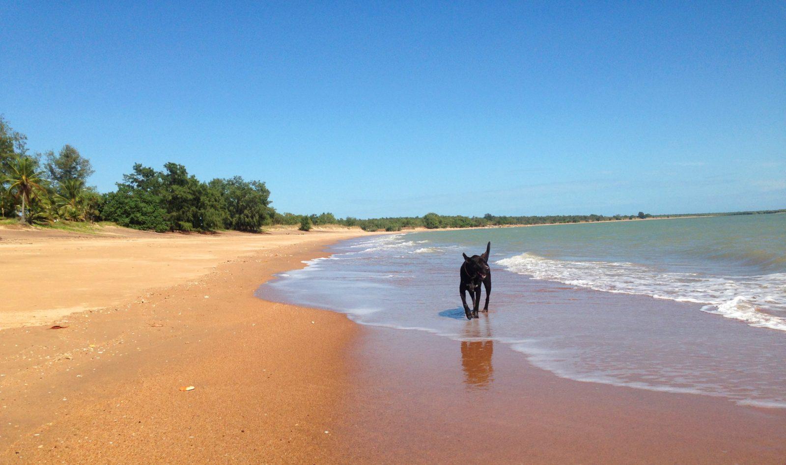 Wagait Beach Dog Friendly