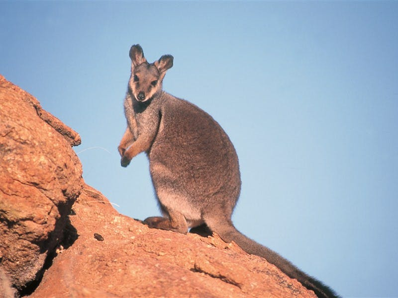 Wallaby Gap, Alice Springs, Northern Territory, Australia