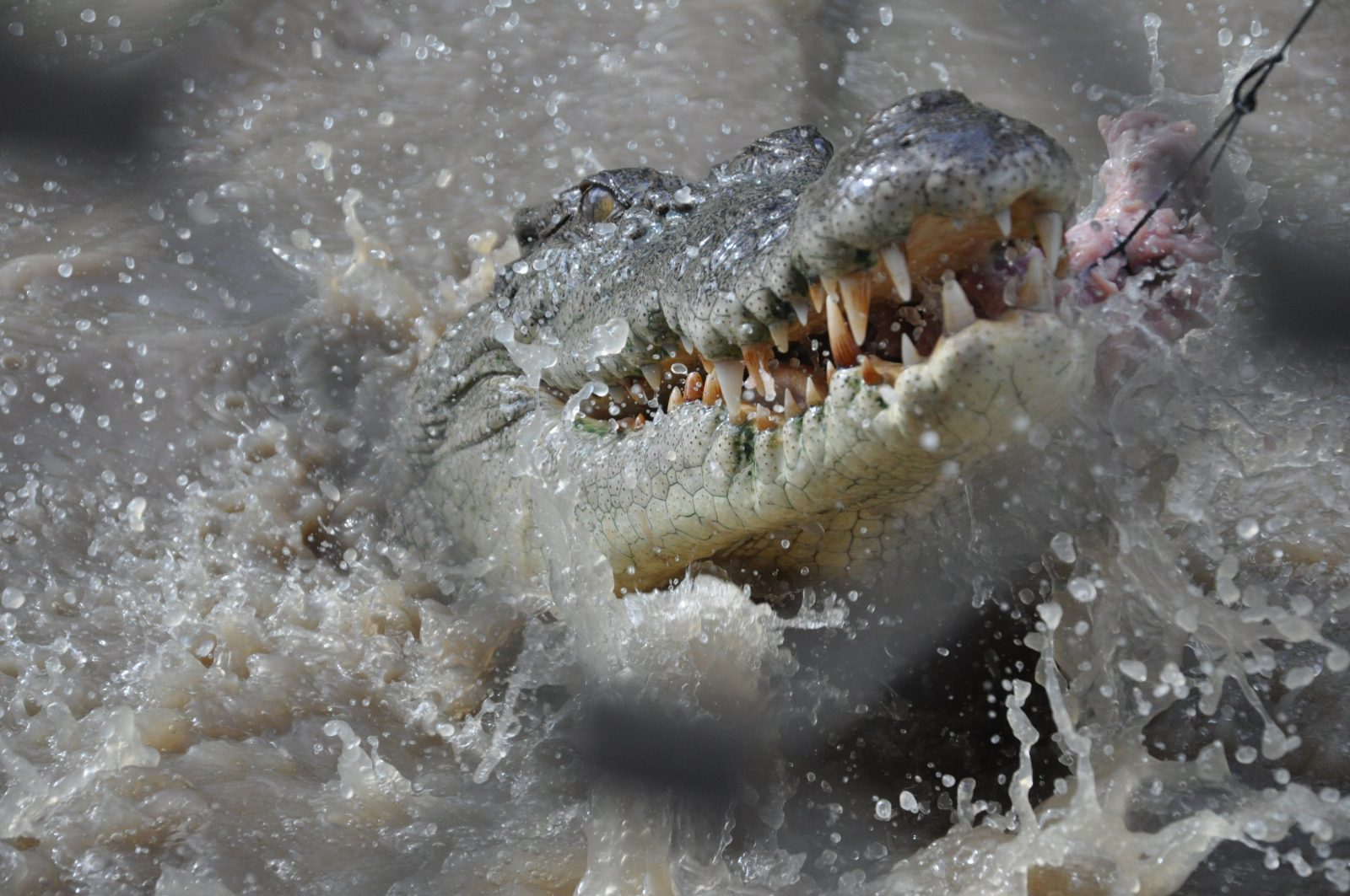 Snap up a great pic on the Jumping Croc Adventure!