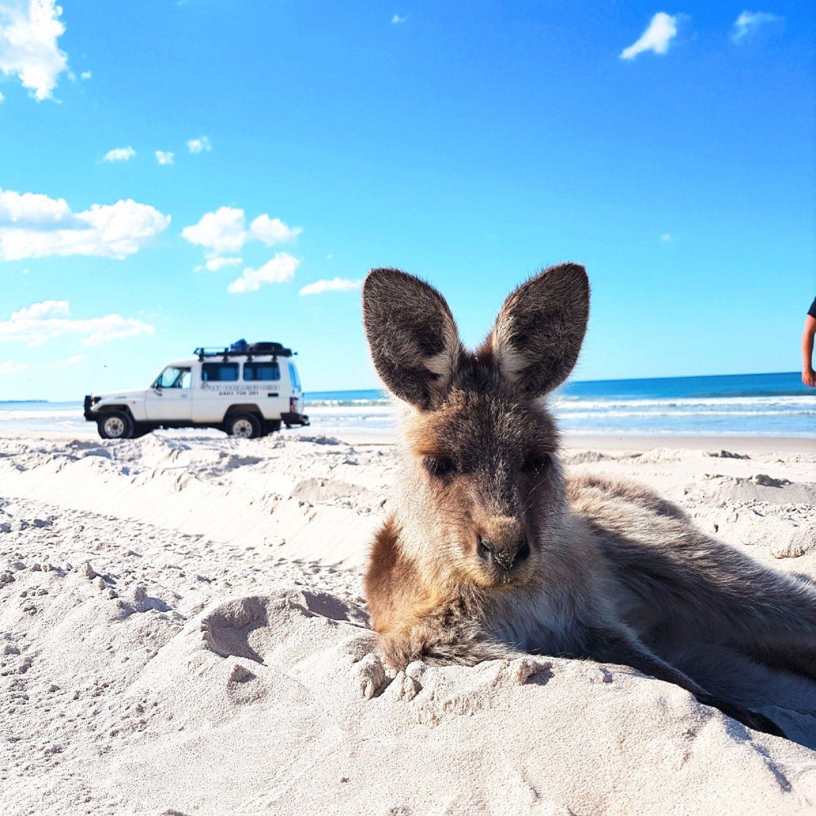 beach days on bribie