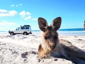 beach days on bribie