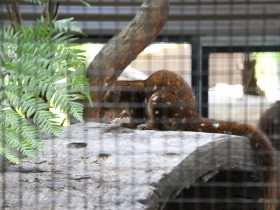 Alexandra Park, Playground and Zoo - Quoll