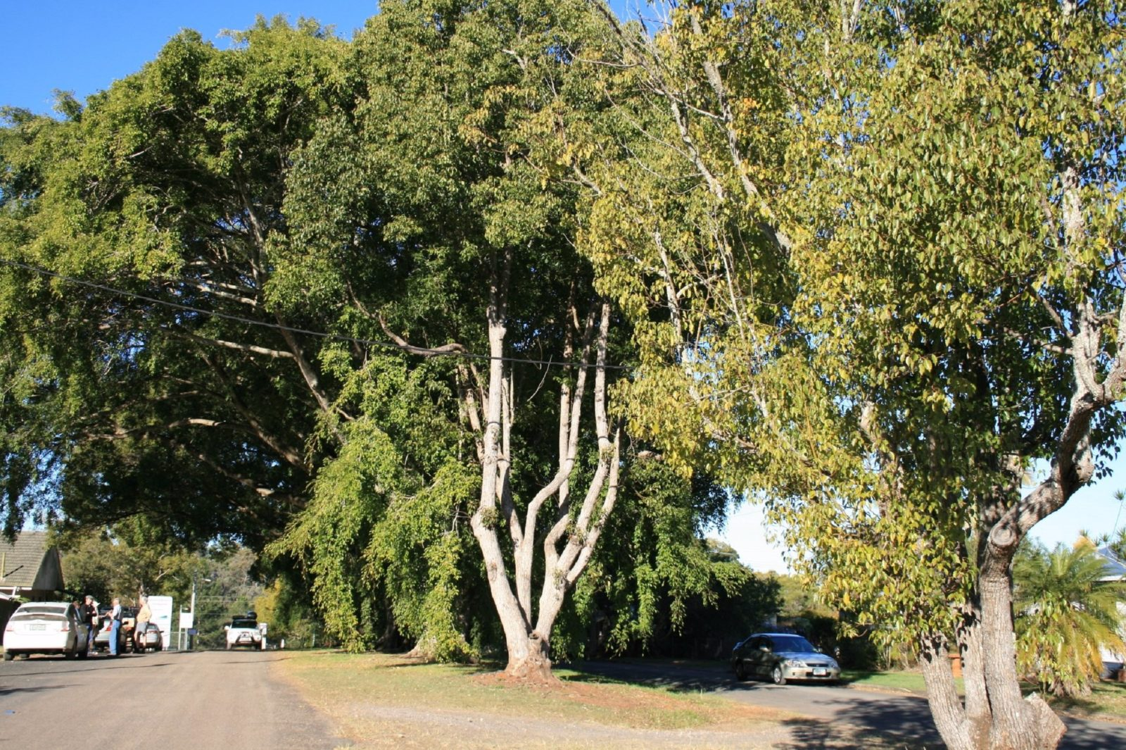 Anzac Avenue Memorial Trees