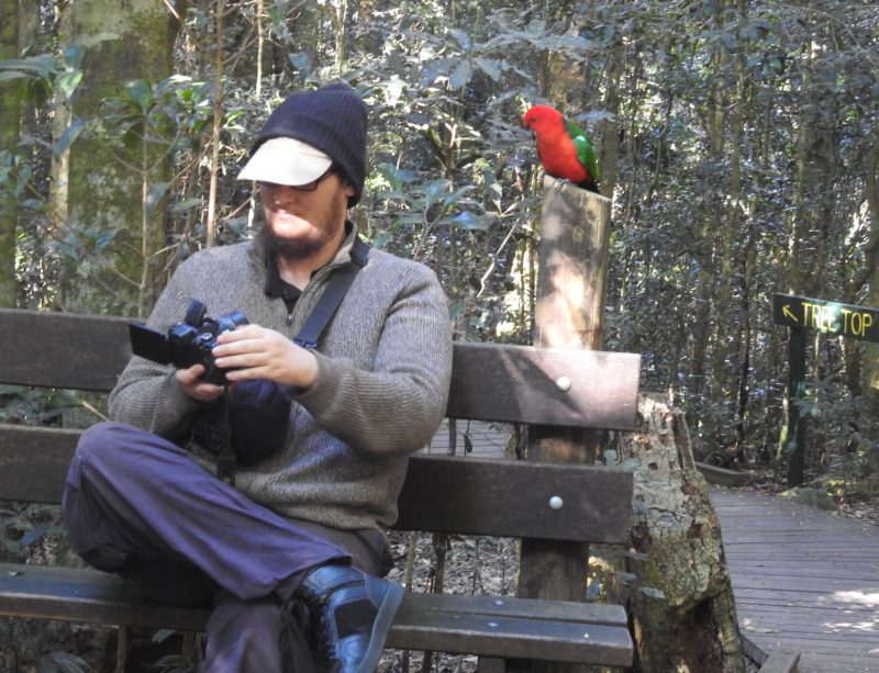 Selfie with king parrot in forest