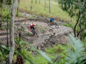 Atherton Forest Mountain Bike Park