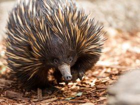 Aussie Wildlife Course