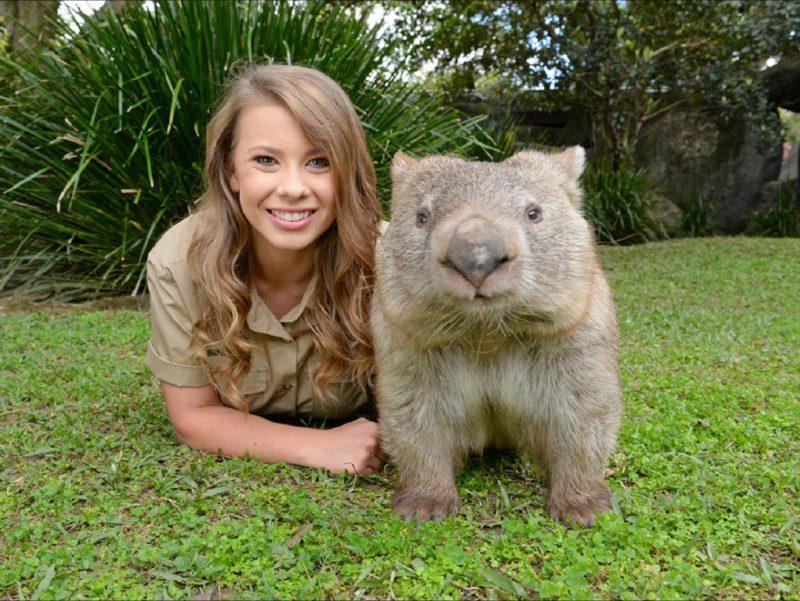 Wombat at Australia Zoo
