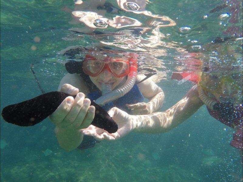 Snorkelling Sea Cucumber