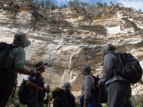 Carnarvon Gorge Guided Tour